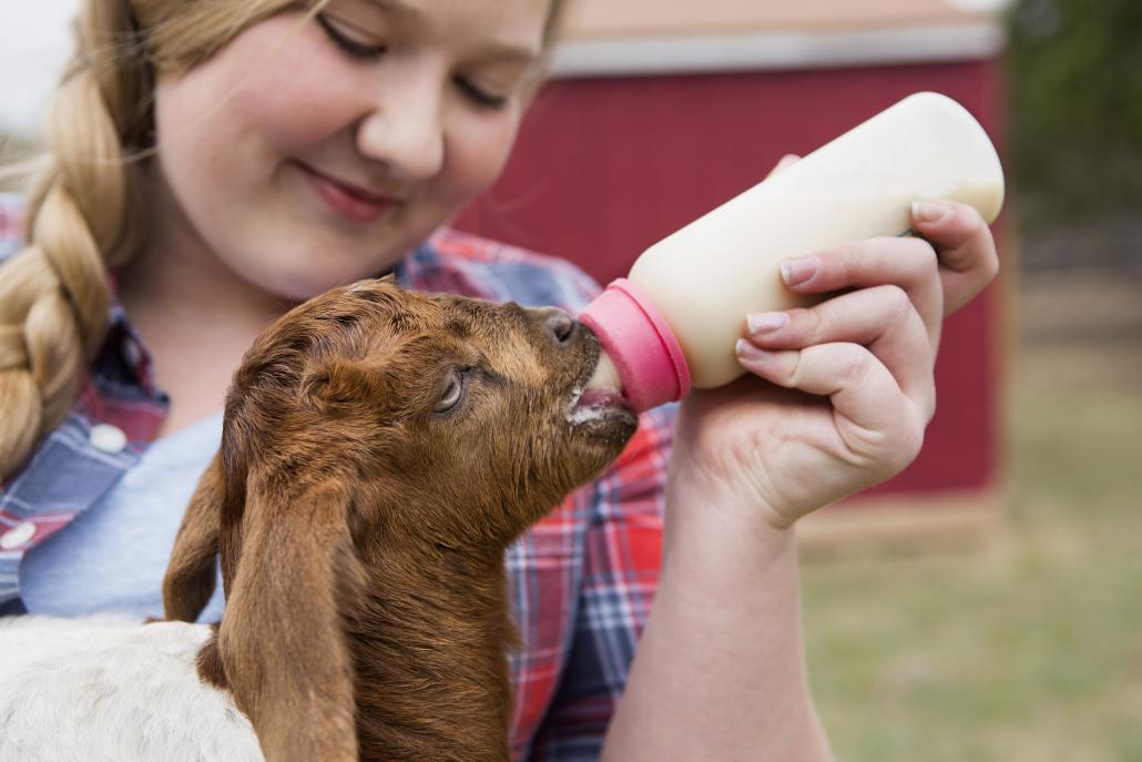 3 Priorities for Nursing Baby Animals